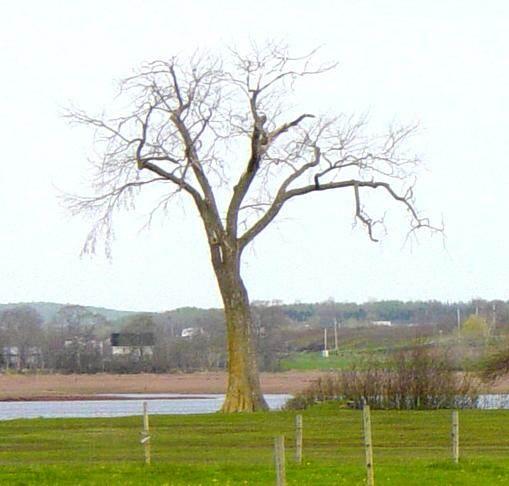 The dead tree at Horton Landing